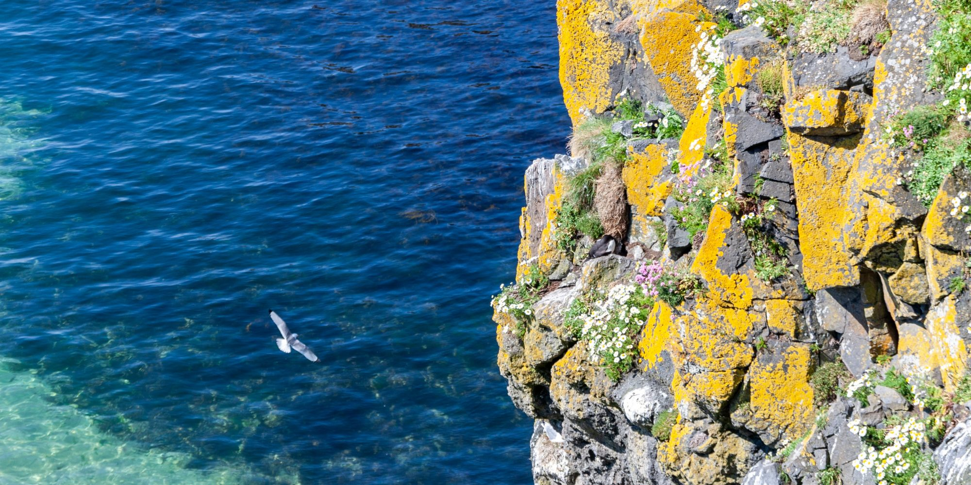Rock face overlooking sea, seagull flying over water